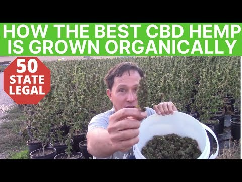 How the Best CBD Hemp Flower is Grown on Certified Organic Farm to Make CBD Oil Products
