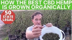 How to Best CBD Hemp Flower is Grown on Certified Organic Farm to Make CBD Oil Products