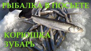 Рыбалка в Посьете 2020 Корюшка зубарь