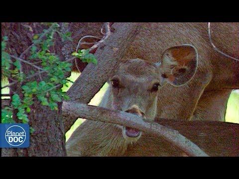 Keoladeo Ghana National Park - Full Documentary