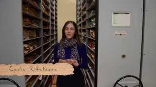 Semillas: Hoy visitamos... El Herbario.