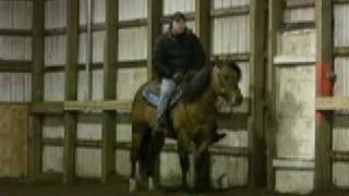 JB TIVIO- Poco Bueno Bloodline AQHA Stallion 37% Poco Bueno Bloodline.100% Foundation