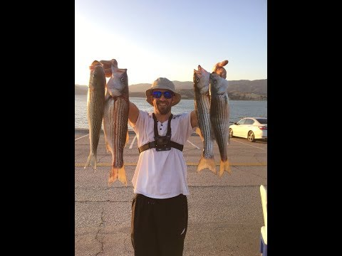 Castaic Lake mad striper action! 06-04-2018