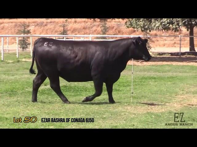 EZ Angus Ranch Lot 50