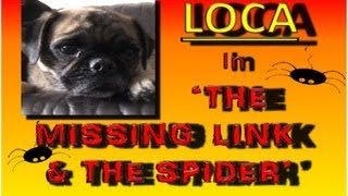 """Loca The Pug """"the Missing Link And The Spider"""""""
