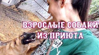 видео Питомник из Бутово кошек и котят
