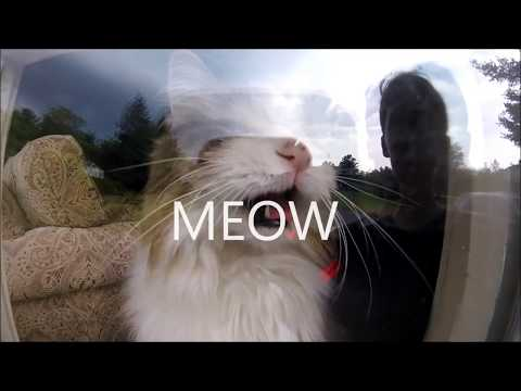 Treehouse's Cat Invades Extreme Water Gun Wars