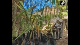 India News (19 Sep, 2018) - World Bamboo Day celebrated in northeastern India