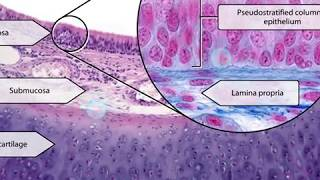 Visible Body | Anatomy & Physiology | New Histology Content