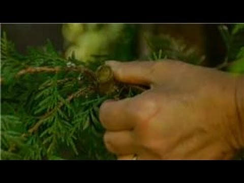 Growing Ornamental Amp Edible Trees How To Properly Prune