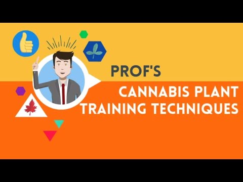 Marijuana Training Techniques - Complete Course All in One Video