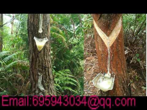 China Gum Rosin, Glycerol Ester Of Gum Rosin, Pentaerythritol Ester Of Gum Rosin Supplier
