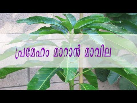 പ്രമേഹം മാറാന് മാവില/Malayalam Health Tips