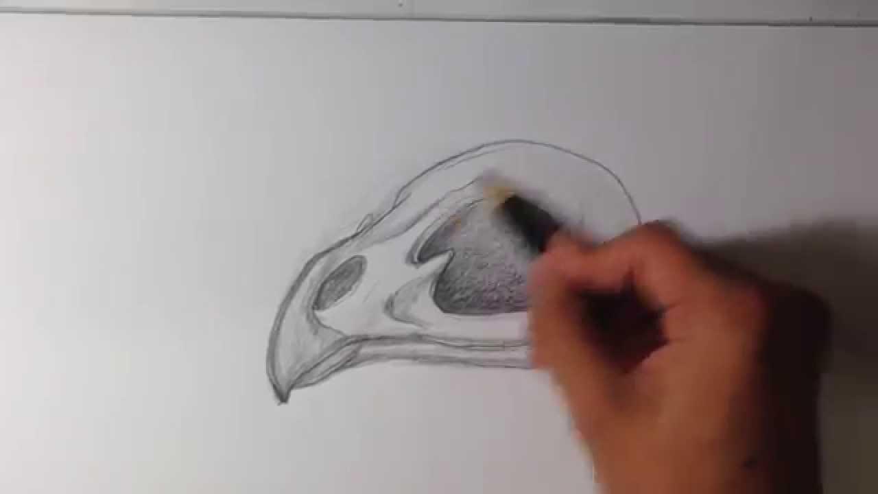 how to draw bird tattoo