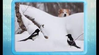 Календарь губернии 15.01.2016(, 2016-01-15T05:38:27.000Z)