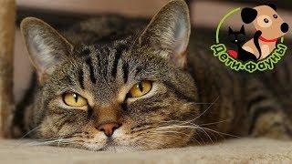 10 популярных вопросов о кастрации котов и стерилизации кошек