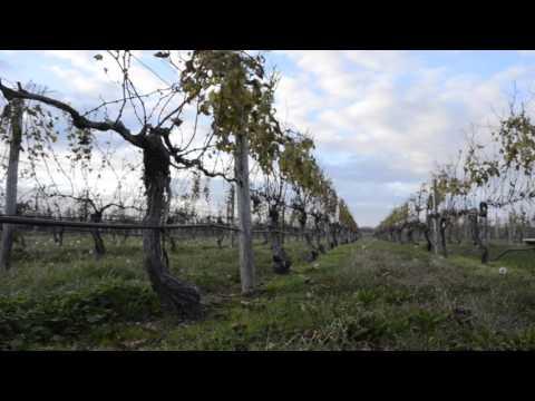 Post Harvest in 30 Seconds - Palmer Vineyards