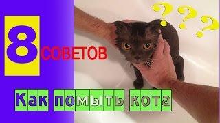 Как помыть кота. Мою кота. Как правильно мыть кошек?(Как помыть кота. Мою кота. Как правильно мыть кошек? В этом видео я дам 8 советов как мыть кошек, чтобы им..., 2016-04-06T12:21:40.000Z)