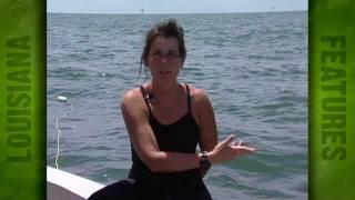 Dead Zone, Gulf of Mexico Hypoxia Zone (2003)