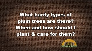 Q&A – What hardy types of plum trees are there?