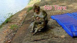 OH NO TARA ! Don't grab baby Lola's food like this   I try stop Tara don't grab food Lola on time