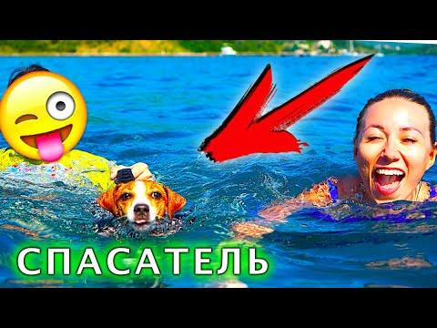 Собака Джина СПАСАТЕЛЬ