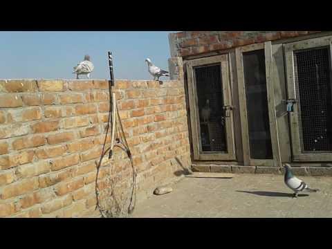 Kabootar house old Bishan Nagar patiala by Hitesh Chauhan
