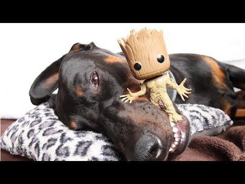 Funny Dog vs Groot: I am Groot Dog Prank