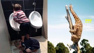 New Most Funniest Photos Of All Time 2017 Funny Pictures Make Your Laugh