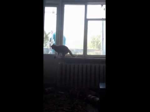 Кот выгнал пацана на балкон! СМОТРЕТЬ ДО КОНЦА!