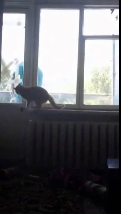 От кота убежал на балкон