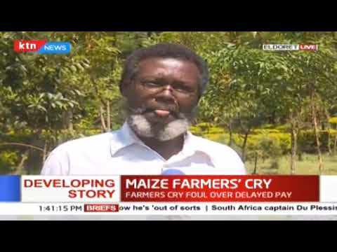 "North Rift farmers ""expecting a huge harvest"" from farms"