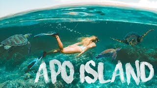 SWIMMING WITH SEA TURTLES in APO ISLAND !! Dumaguete Philippines