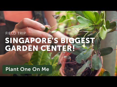Singapore's World Farm Nursery Tour — Plant One On Me — Ep 129