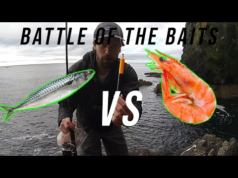 Sea Fishing UK | Best Float Fishing Bait | Prawn Vs Mackerel