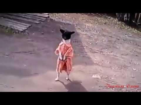 Собака друг человека - YouTube