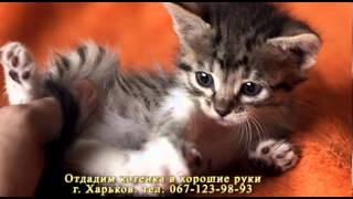 Отдам котенка в хорошие руки ( Украина, г. Харьков)