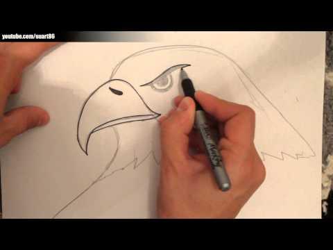 Como dibujar un aguila