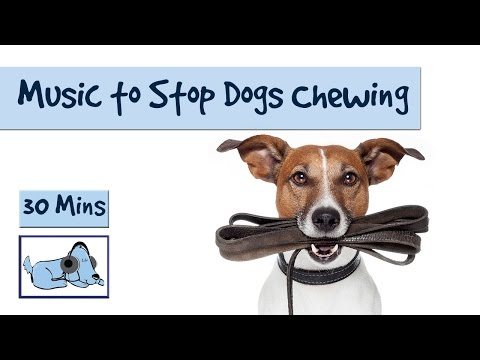 relaxing-dog-music---music-to-stop-your-dog-from-chewing-and-other-destructive-behaviours