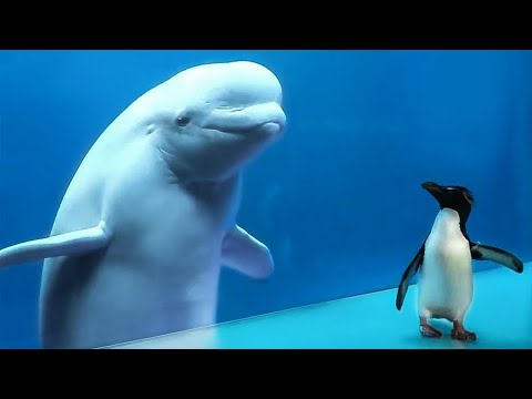 Кит Впервые Увидел Пингвина, и Вот Что Произошло Дальше