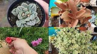 Compré Suculentas Muy Hermosas para la Colección!Plantas en Descuento!#suculentas #jardineria