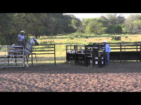 Calf Roping Horse For Sale - Quails Sugar Daddy - 2008 Gray Gelding