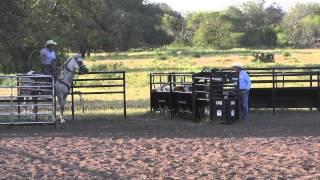 Calf Roping Horse For Sale - Quails Sugar Daddy - 2008 Gray Gelding