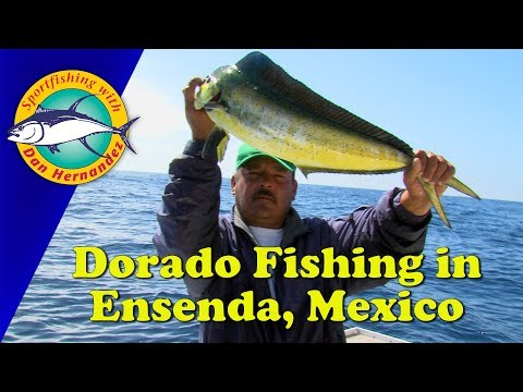 Dorado Fishing From Ensenada, Mexico | SPORT FISHING