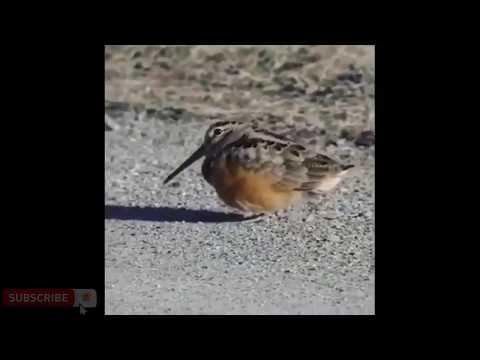 Bird On The Dance Floor .. لما تعمل حاجة بالصدفة وتطلع معاك صح