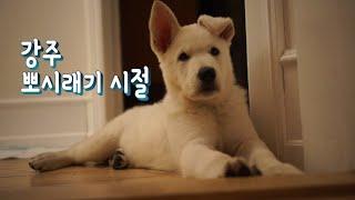 강주 애기 시절ㅣ한-덴 국제커플의 화이트스위스셰퍼드