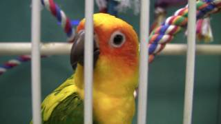 Playful Parrot - Hard to Keep Up