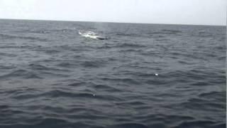Купаемся с китами в Индийском океане )) Видео от www.yalta-rr.com(Купаемся с китами в Индийском океане )) Видео от www.yalta-rr.com., 2014-06-11T08:04:36.000Z)