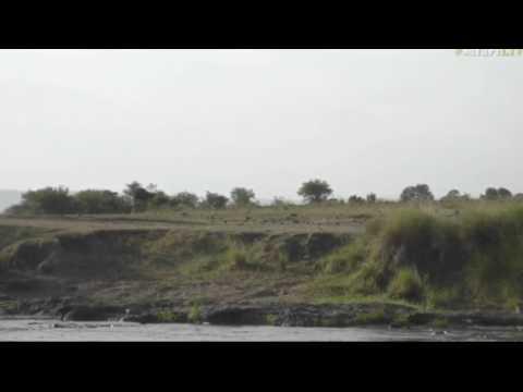 July 18, 2017-  Sunset- James spots a Black Backed Jackal on one of the Mara Cams