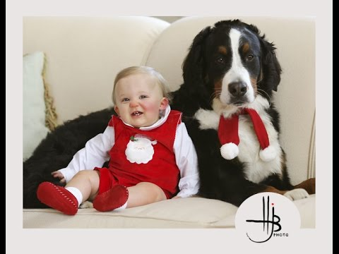 Bernese Mountain Dog and Baby Videos Compilation - Dog loves Baby Forever